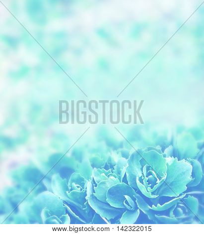 Background of spring flowers. Wildflower daisies. landscape.