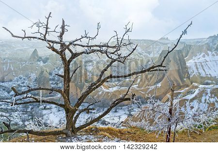 The gnarled bare branches of the old tree growing in mountains with the rocky landscape of Cappadocia on the background Turkey.
