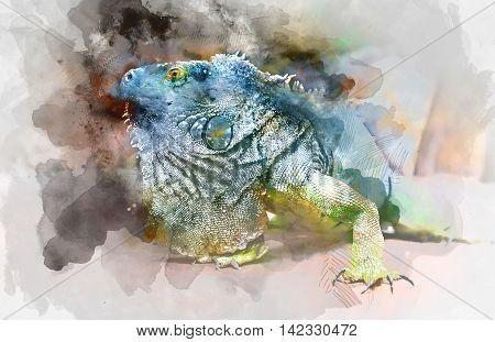 Close-up of green iguana (Iguana iguana). Digital watercolor painting