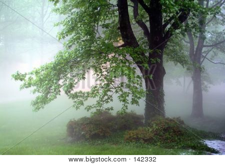 Forest In The Fog 2