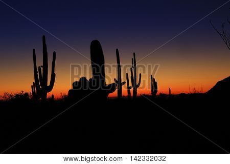 giant Saguaro cactus in Arizona desert sunset
