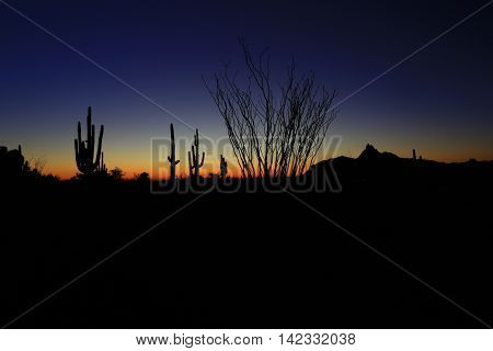 Giant saguaro and organ pipe cacti in Arizona sunset