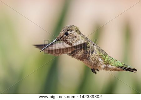 Cute Humming Bird
