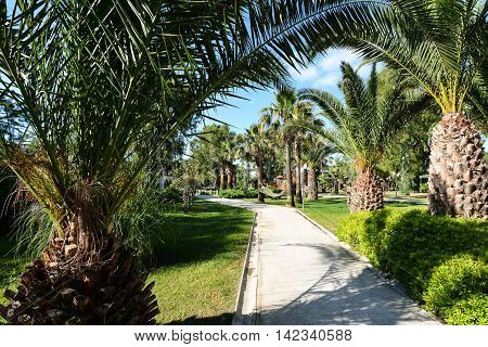 Beautiful palm trees garden in Kusadasi Turkey