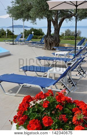 Sunbeds and geranium flowers near a swimming pool