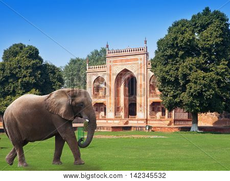 elephant on a grass before Gate to Itmad-Ud-Daulah's Tomb (Baby Taj) (17th century)at Agra Uttar Pradesh India