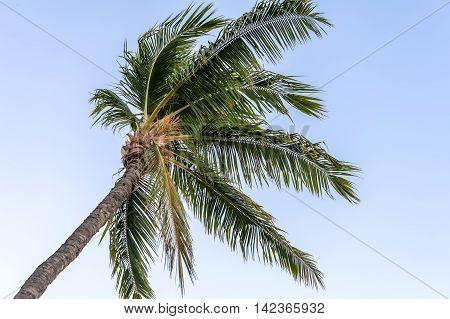 Palm Tree Over Blue Sky