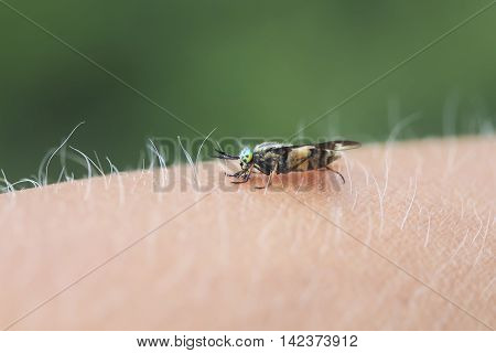 insect gadfly with big eyes sitting on his hand and drinks the blood