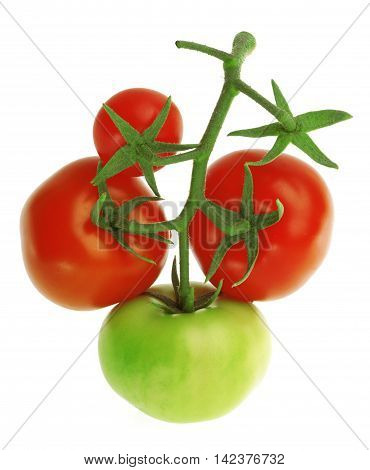 Branch with fresh red and green Tomatoes on a white background.