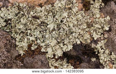light and dark lichen on the stone.
