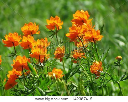 Bright orange flowers decorate steepe and timber landscape