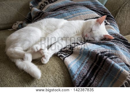 A white cat stretches on a couch.