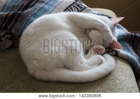 White cat curled up on a couch with paws covering her face.