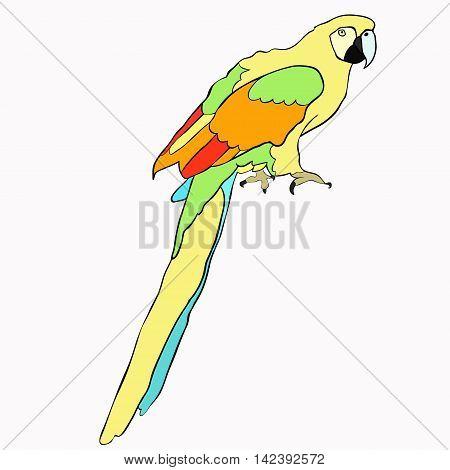 Golden The Caribbean Parrot Sitting. Vector Illustration