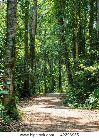 Walking Trail In Forest At Koh Kood