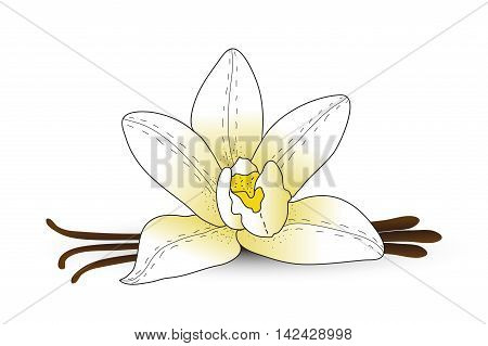 Vanilla flower vanilla spice. Hand drawing style. Vector illustration
