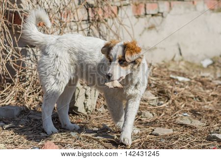Cute mixed breed stray puppy holding bone