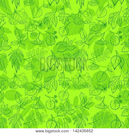 Seamless Nature Background with Green Summer Tree Leaves Contours and Silhouettes, Willow, Hawthorn, Poplar, Aspen, Ginkgo Biloba, Elm, Alder, Linden, Rowan, Chestnut, Black Chokeberry, Beech. Vector