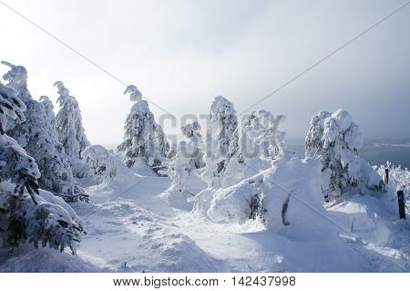 a winter wonderland on the Fichtelberg in the Ore Mountains in Saxony, Germany, thick snowy spruces