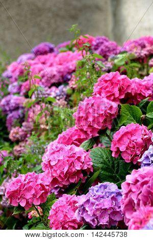 a bouquet of beautiful flowers of hydrangeas
