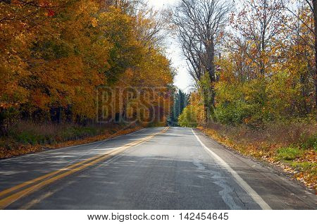 Autumn leaves on a rural country road