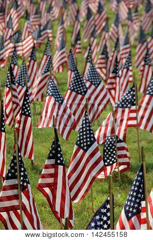 Beautiful scene with patriotic American flags set in an open field.