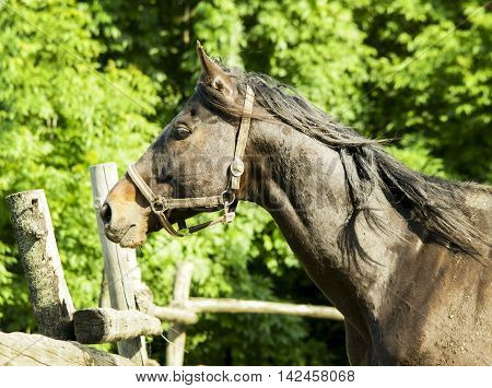 black horse with dark mane and tail stands on the ground in the paddock near the wooden fence
