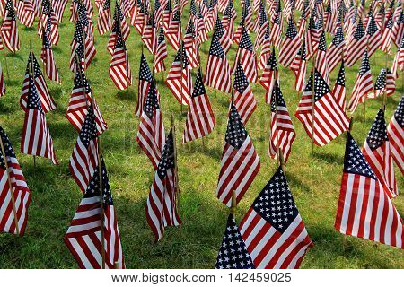 Emotional image of several American flags in field.