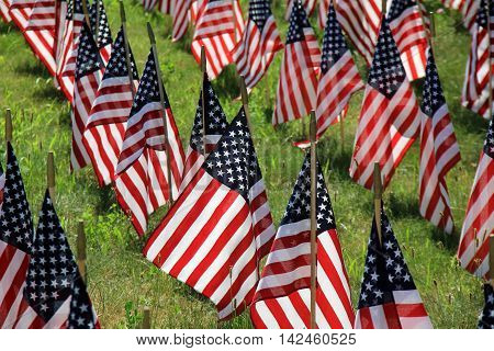 Lawn covered with patriotic flags serves to illicit many emotions in  veterans and civilians alike.