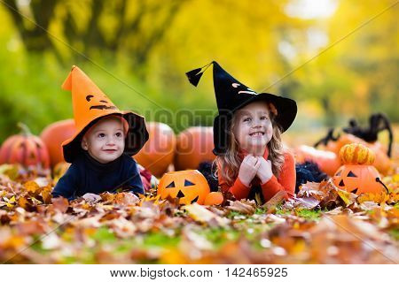 Children wearing black and orange witch costumes with hats playing with pumpkin and spider in autumn Park on Halloween. Kids trick or treat. Boy and girl carving pumpkins. Focus on girl.