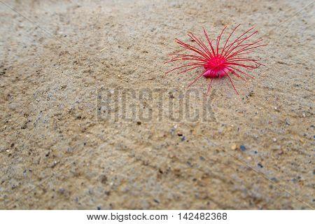 Red flower fell on the Concrete floor