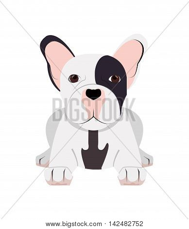 flat design french bulldog icon vector illustration