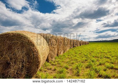Meadow with hay bales after a reap