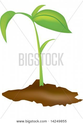 Vector illustration of a young green seedling