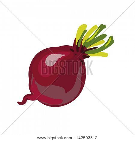 Red beetroot whole isolated on white background. Vector Illustration.