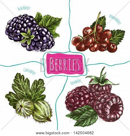 Vector illustration colorful set with berries. Various kinds of berries on white background