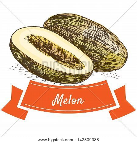Vector illustration colorful set with melon. Illustration of fruits