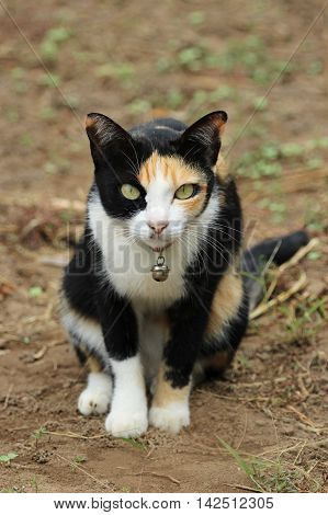 Image of a cat sat on the ground