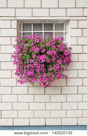 window flowering on brick wall, Serbia