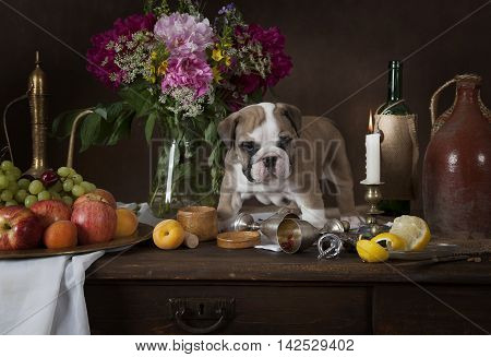 Six weeks old English Bulldog puppy standing on the table with fruit flowers candles and wine in classical Dutch style
