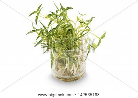 Bean sprouts in little glass pot on white background