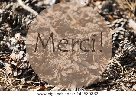 Texture Of Fir Or Pine Cone. Autumn Season Greeting Card. French Text Merci Means Thank You