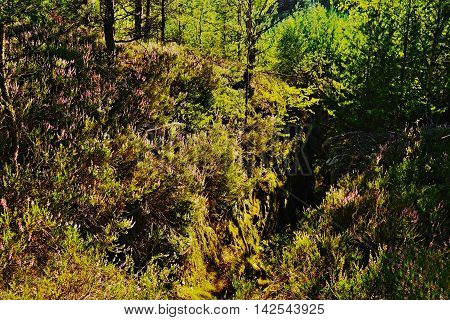 contrasting scene in strong backlighting with the blooming heather on rocks in a tourist area Machuv kraj in czech landscape