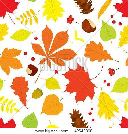 Autumn seamless pattern of different tree leaves - oak, chestnut, birch, Rowan, linden, jasmine, lilac, maple, willow, poplar, sycamore, Rowan berries, acorns, pine cone, nuts on white background.
