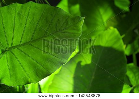 close up view of nice fresh leaf on green back