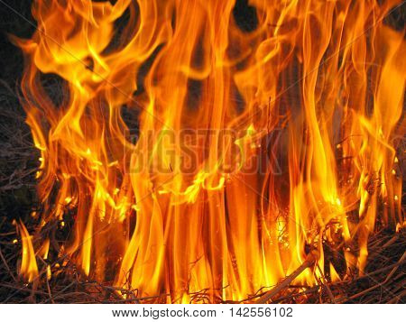 forest body of flame inflaming in a field