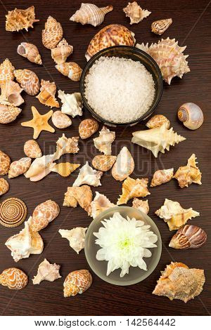 Sea shell background abstract spa, white flower