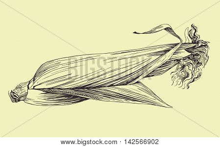 Vector hand drawn corn cob illustration. Food collection