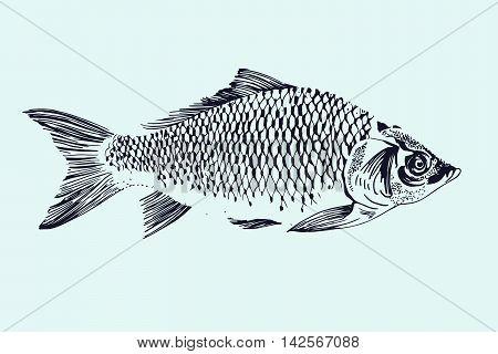 Vector hand drawn fish illustration. Sea food.