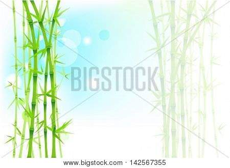 Bamboo fresh blue and white asian background